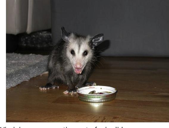 Figure 10 from Captive marsupial nutrition  - Semantic Scholar