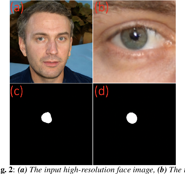 Figure 2 for Eyes Tell All: Irregular Pupil Shapes Reveal GAN-generated Faces