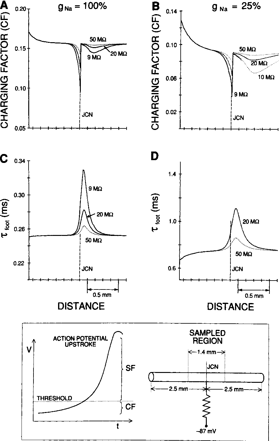 Directional Characteristics Of Action Potential Propagation In