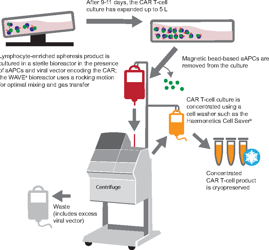 Figure 2 From Global Manufacturing Of Car T Cell Therapy Semantic
