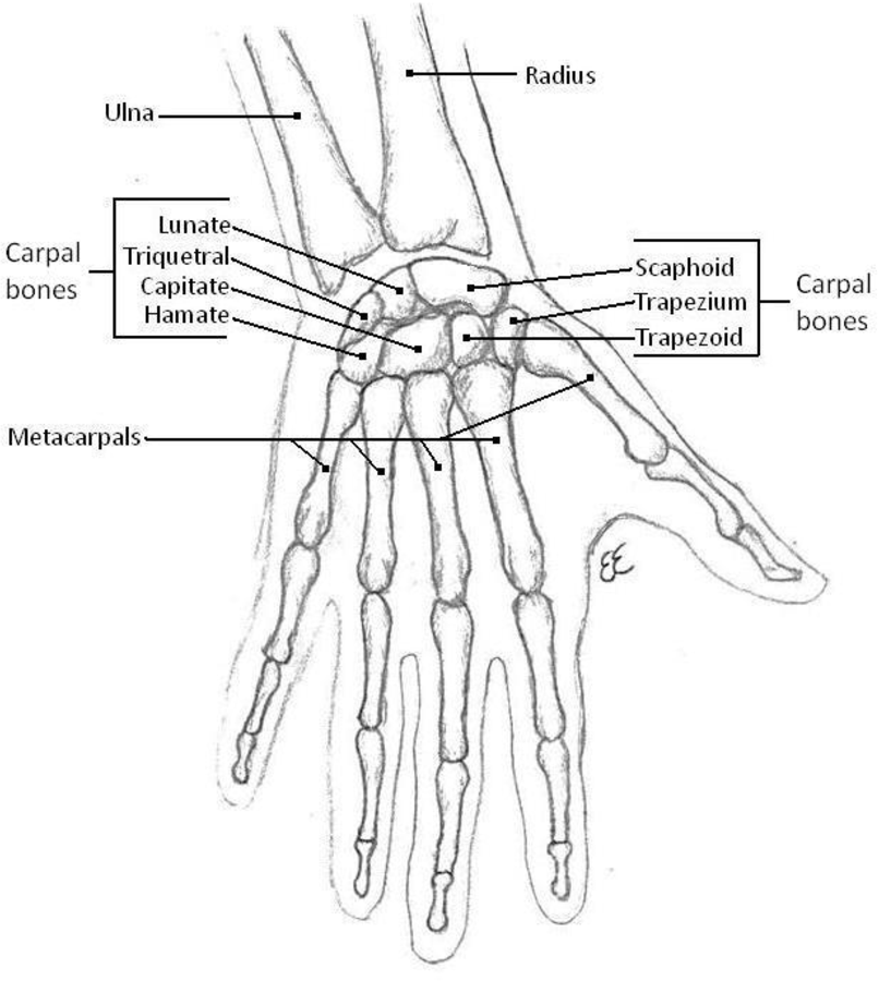 Figure 1 3 From The Development And Application Of A Forearm