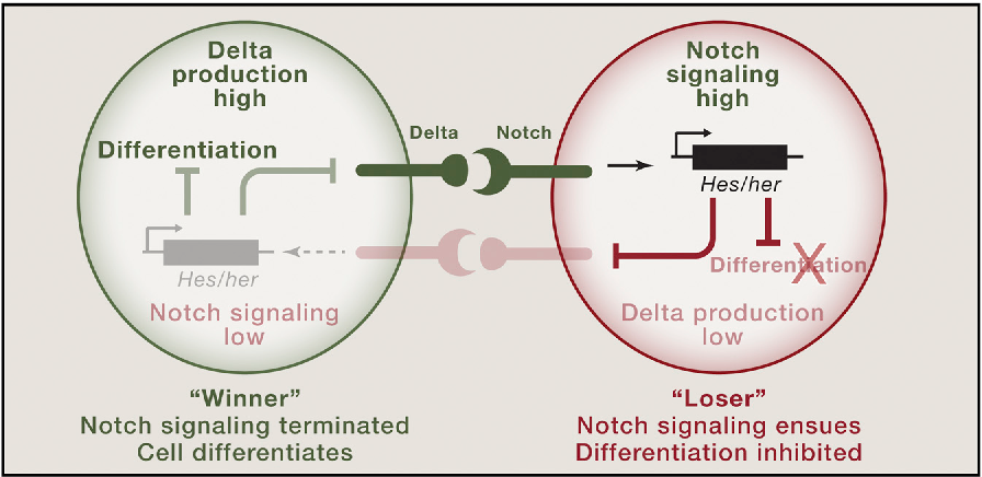 The Dark Side of Cell Signaling: Positive Roles for Negative ...