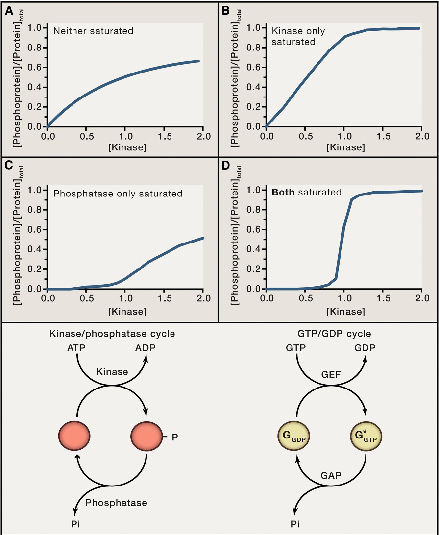 Dorable Which Side Of A Cell Is Positive Vignette - Electrical ...