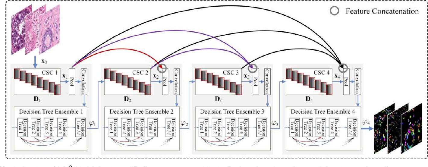Figure 4 for Sparse Coding Driven Deep Decision Tree Ensembles for Nuclear Segmentation in Digital Pathology Images