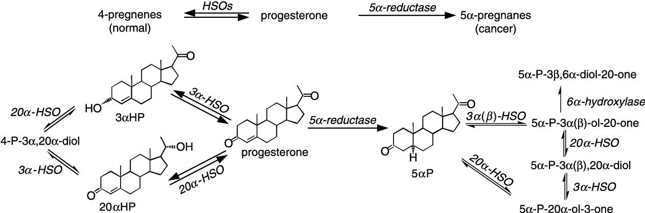 Figure 2 Progesterone Conversion To 4 Pregnene And 5a Pregnan 5a Reductase Reaction