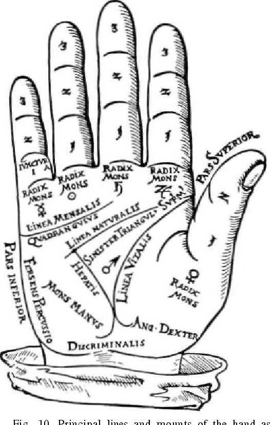 The anthropology and social significance of the human hand ...