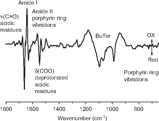 Figure 8 Oxidized-minus-reduced Fourier transform infrared spectroscopy difference spectrum of the cytochrome c oxidase from P.denitrificans for the full potential step from -0.5 to 0.5 V vs. a Ag/AgCl reference electrode.