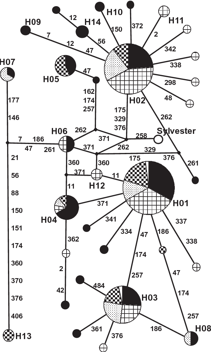 FIG. 3—Minimal spanning network of mtDNA CR haplotypes for all cat populations. Specific populations are represented by patterns: California (solid black), Hawaii (open squares), New York (stippled), and Texas (checkered squares). Unfilled wedges in H01 and H03 represent control sample mitotypes. Bold designators (H##) indicate haplotypes. Theoretical intermediary haplotypes are identified by diamond nodes. Samples without identifiers are unique. The composite ''Sylvester'' reference sequence is noted. Numbers on the branches indicate the positions and amount of mutations needed to derive connecting mitotypes.
