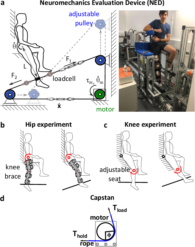 Figure 1 for Cable-driven robotic interface for lower limb neuromechanics identification
