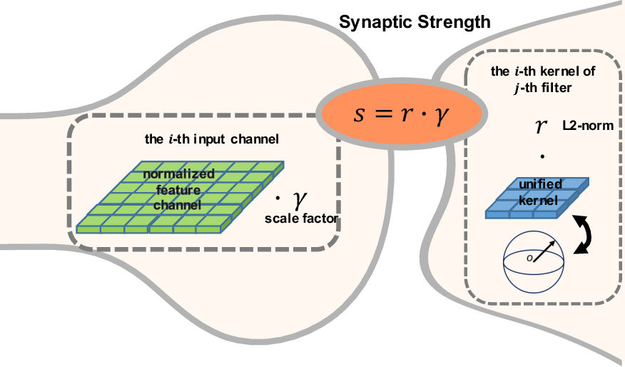Figure 1 for Synaptic Strength For Convolutional Neural Network
