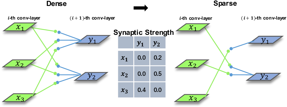 Figure 3 for Synaptic Strength For Convolutional Neural Network