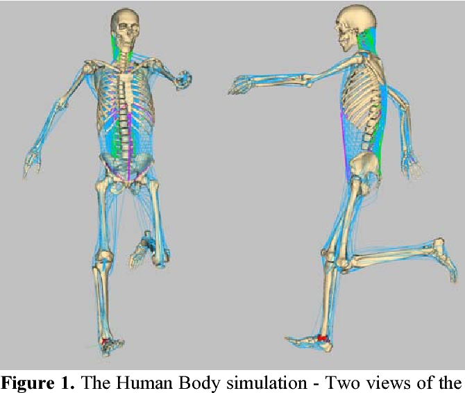 Definition Of The Kinematic Plant For The Human Musculoskeletal