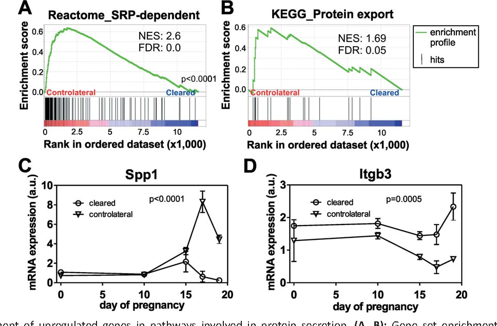 Molecular aspects of adipoepithelial transdifferentiation in mouse ...
