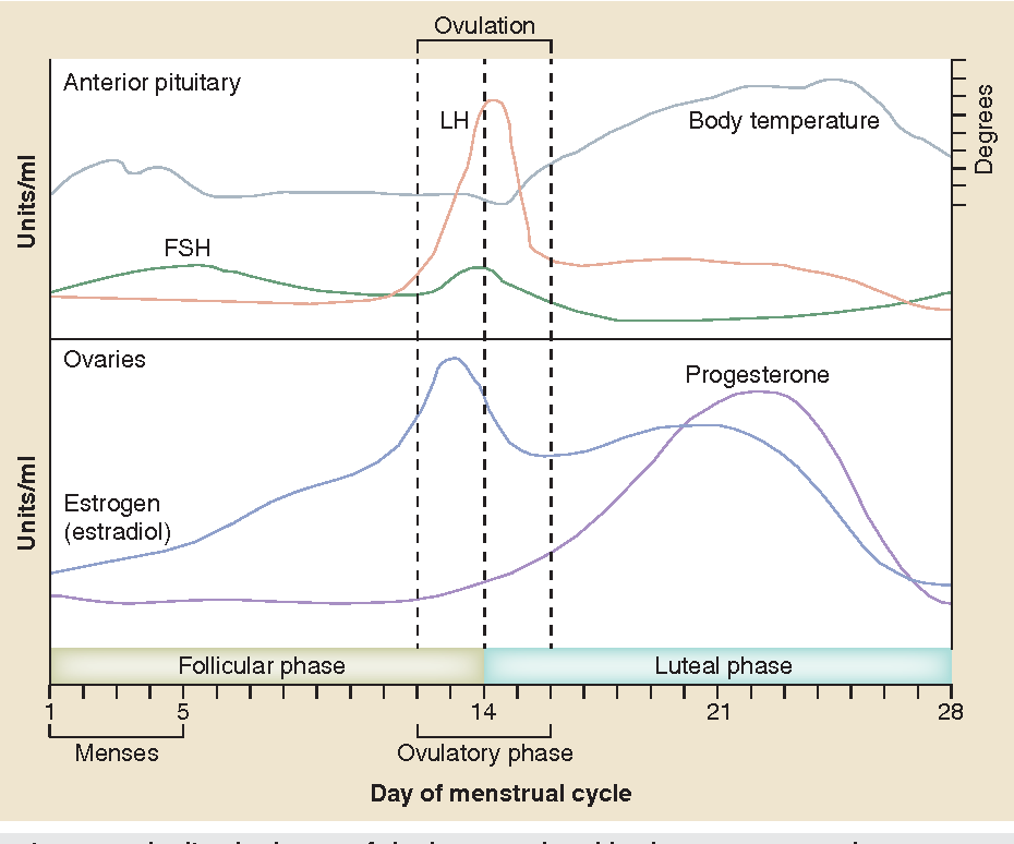 Figure 2. Idealized scheme of the hormonal and body temperature changes during the menstrual cycle.