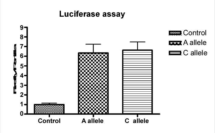 Figure 2: Measurements of DPP4 promoter activity according to regulatory SNP g.-234A/C. The transcriptional activity of the DPP4 promoter genotype of g.-234A/C was analyzed by luciferase-based reporter assay as detailed in Materials and Methods. Reporter vectors containing -507 to -31 region of the DPP4 gene were cloned from homozygote with each of the genotype. Promoter activities were measured in Caco-2 cells (n=3) 2 days after transfection with the reporter plasmid. The reporter activity of each construct was compared with that of the control mock vector (pGL3-basic). Values are presented as means ± SD.