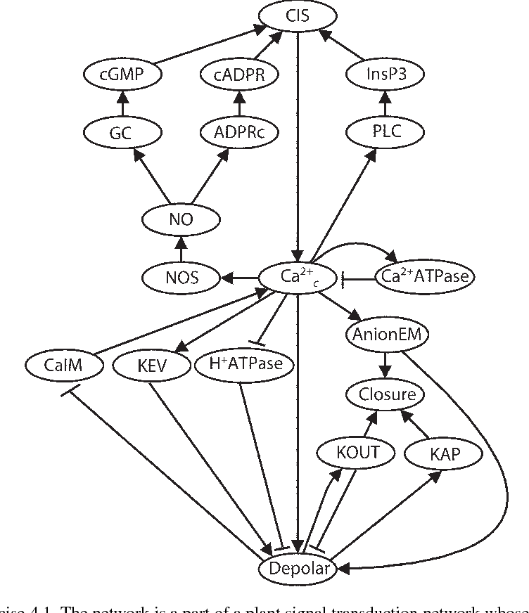 Chapter 4 Signaling Networks Asynchronous Boolean Models