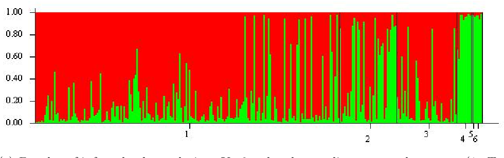 Figure 2.6.: Structure graphical output of population structure for 282 genotypes at population size K=2, with genotypes ordered (a) according to the two subpopulations, (b) genotypes ordered to match the genotype group and (c) ordered according to cytoplasm type. Individual genotypes are plotted on the x-axis. The probability (Q-value) of each genotype belonging to subpopulation 1 (red) or subpopulation 2 (green) is plotted on the y-axis