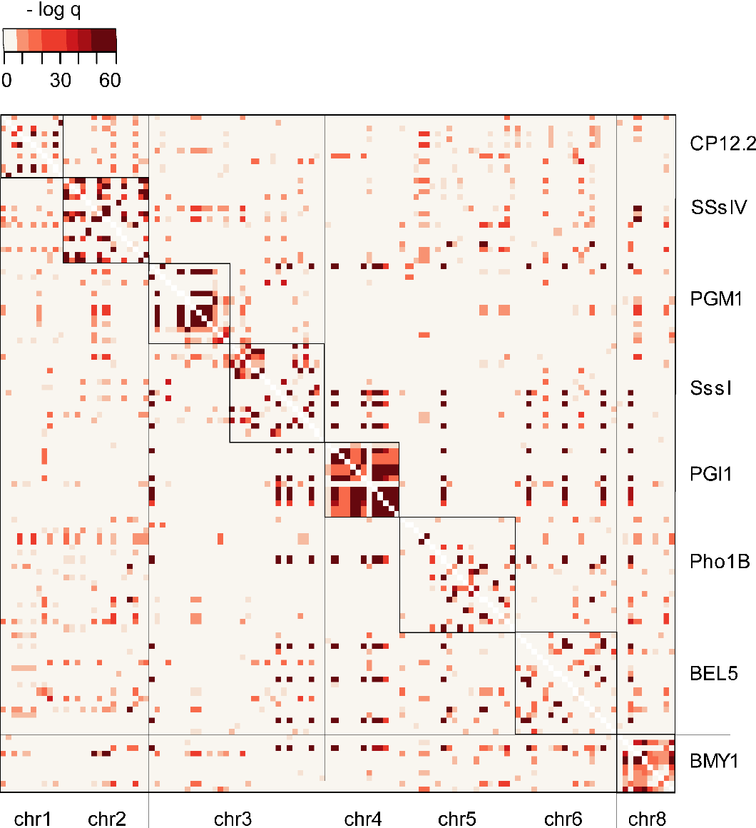 Figure 2.8.: Linkage disequilibrium between pairs of SNPs in candidate genes. Displayed are -log q-values. Each row and line corresponds to one SNP position. Loci are framed with black boxes