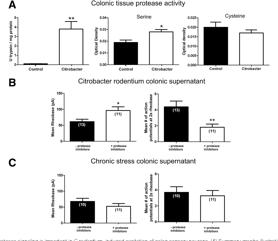 Figure 5. Protease signaling is important in C rodentium–induced excit left), serine protease (center), and cysteine protease (right) activities in m rotease activities, but not cysteine proteases, were elevated following