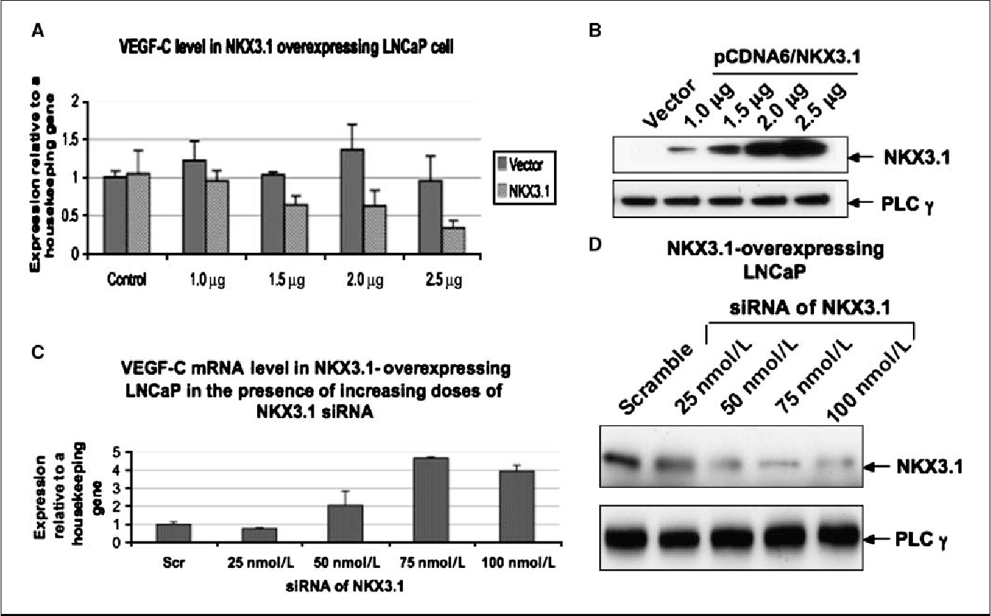 figure 2 from loss of nkx3 1 favors vascular endothelial growthnkx3 1 overexpression inhibits vegf c mrna expression in prostate cancer