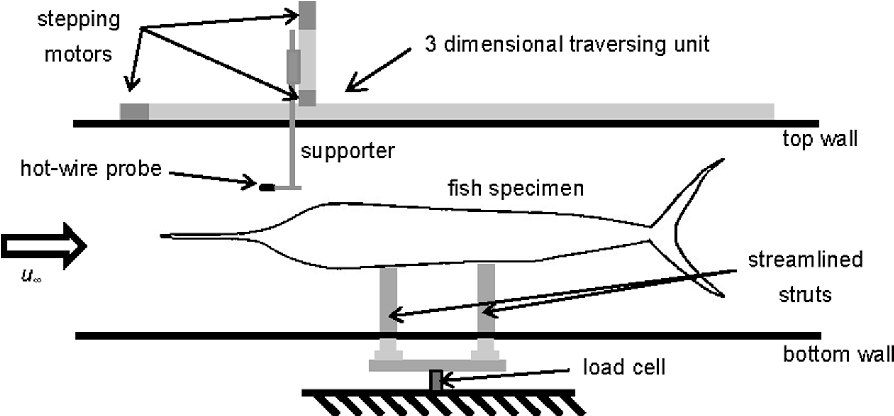 Hydrodynamic Characteristics of the Sailfish (Istiophorus ...