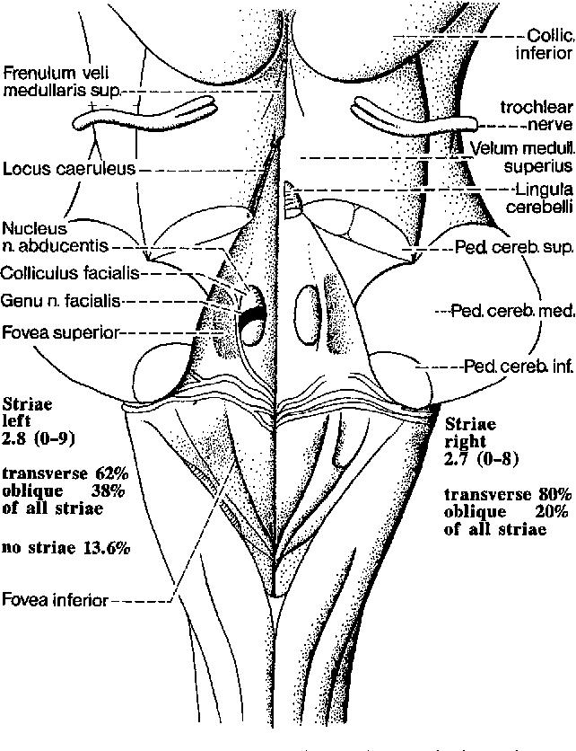 Figure 6 from Anatomical landmarks of the rhomboid fossa (floor of ...