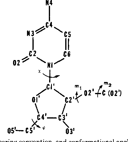Fig. 1. Structure, numbering convention, and conformational angles for 2'-O-methyl cytidine.
