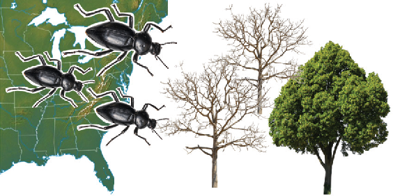 Figure 4 for Scalable Relaxations of Sparse Packing Constraints: Optimal Biocontrol in Predator-Prey Network