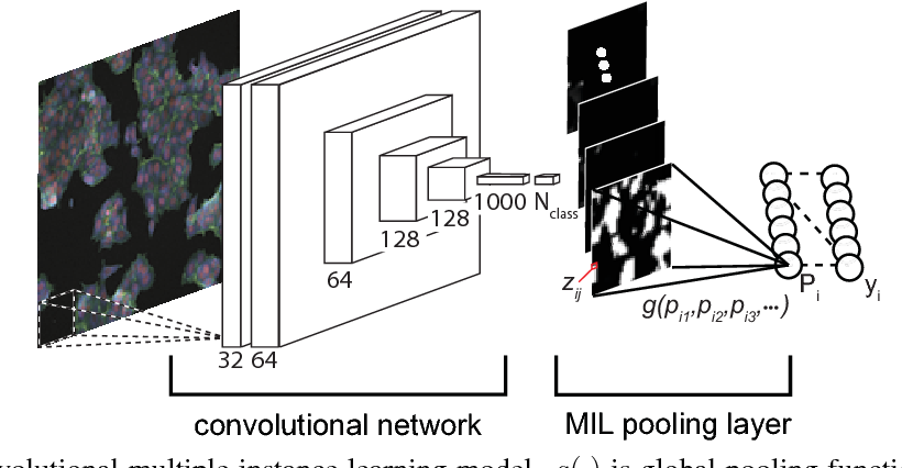 Figure 1 for Classifying and Segmenting Microscopy Images Using Convolutional Multiple Instance Learning