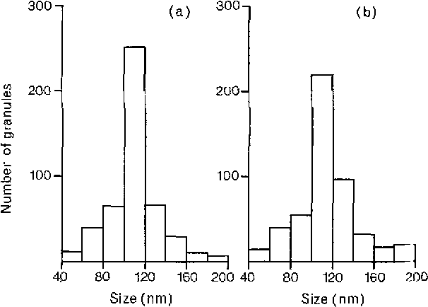 Fig. 16a and b. Histogram showing size-distribution of GV in SGC-cells m (a) newborn and (b) adult rat