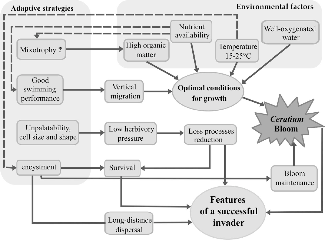 Figure 6 from towards a comprehension of ceratium dinophyceae 6 a synthesis diagram showing relationships among environmental conditions adaptive strategies and invasion ccuart Gallery