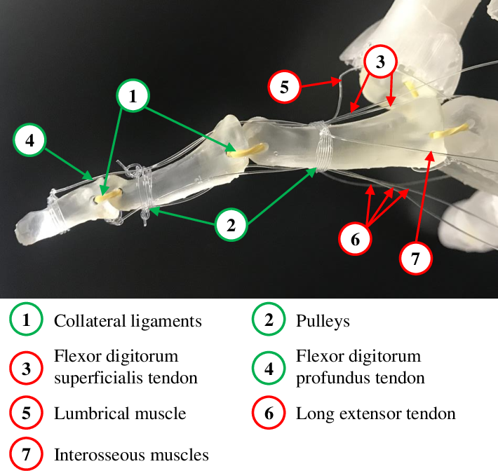 Figure 4 for Fast 3D Modeling of Anthropomorphic Robotic Hands Based on A Multi-layer Deformable Design