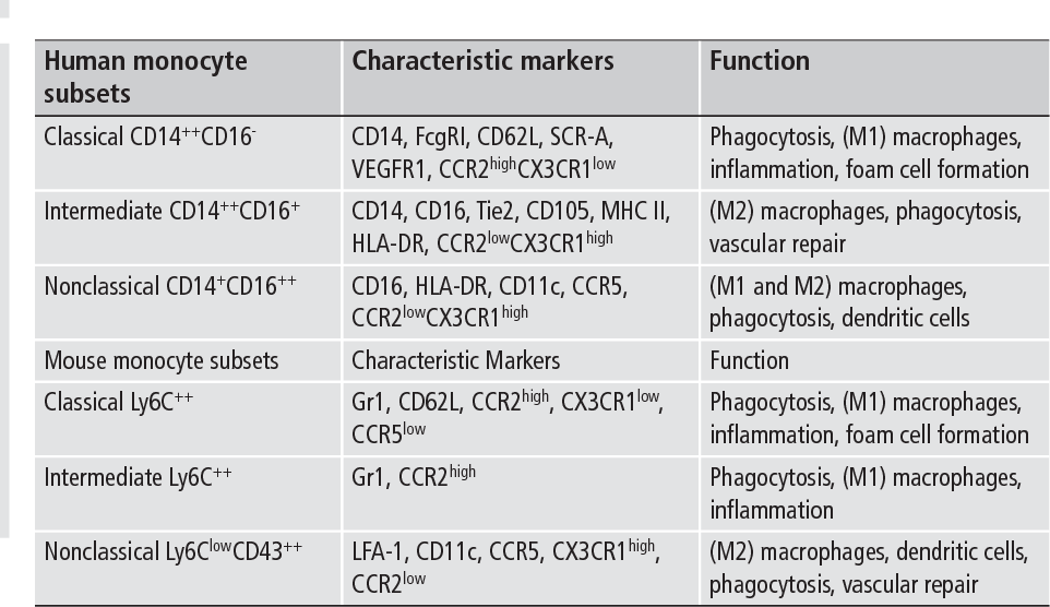 Table 1: Monocyte subpopulations in humans and in mice.