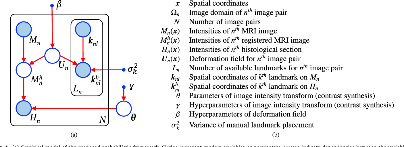 Figure 1 for Joint registration and synthesis using a probabilistic model for alignment of MRI and histological sections