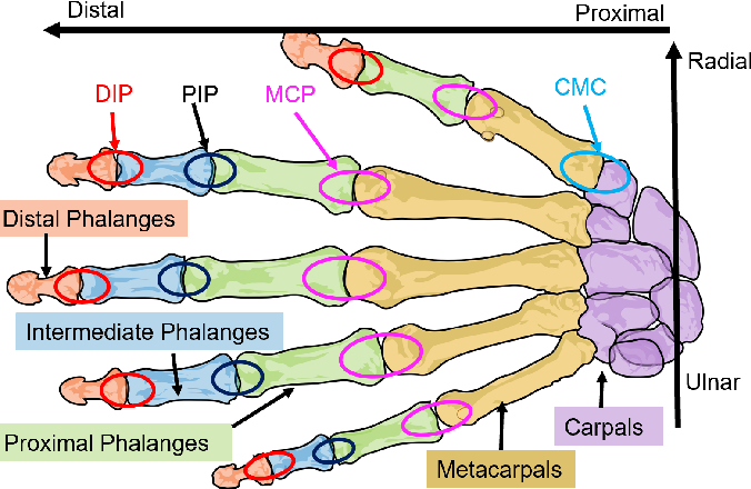 Figure 1 for A Novel Approach to Model the Kinematics of Human Fingers Based on an Elliptic Multi-Joint Configuration