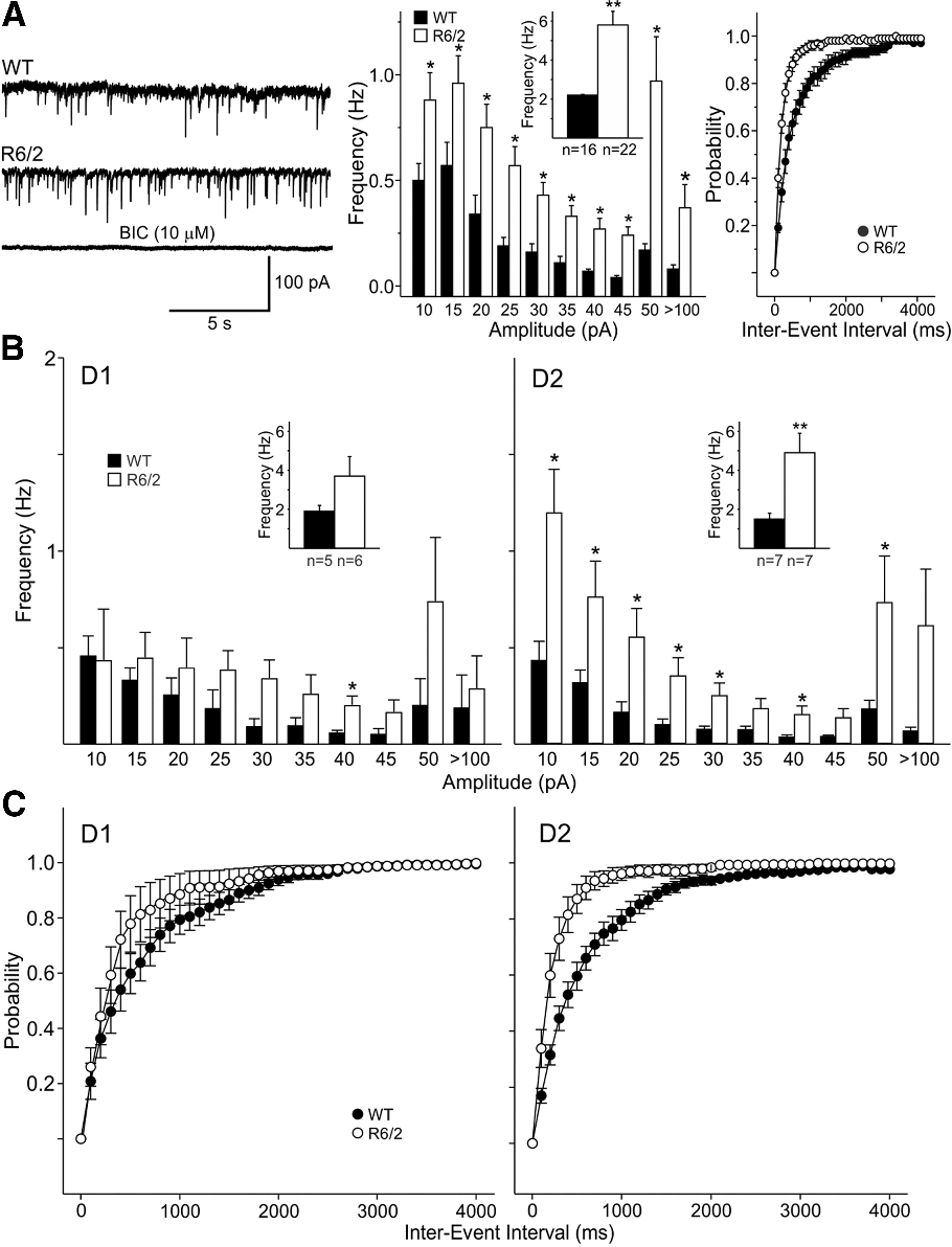 Multiple sources of striatal inhibition are differentially affected ...