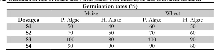 Table 2. Germination rate of maize and wheat plants with microalgae and equivalent fertilizer.