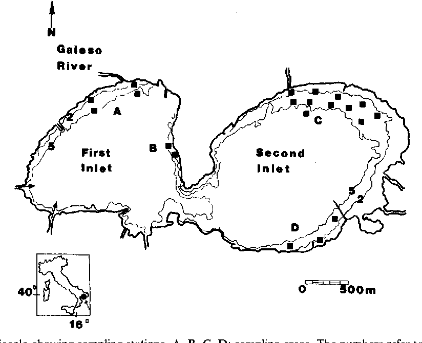 Presence Of A Drifting Algal Bed In The Mar Piccolo Basin Taranto