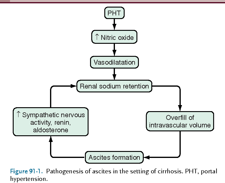 Peritonitis Pathophysiology Diagram