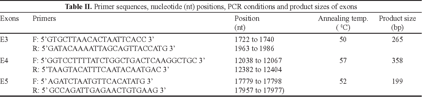 Table II. Primer sequences, nucleotide (nt) positions, PCR conditions and product sizes of exons