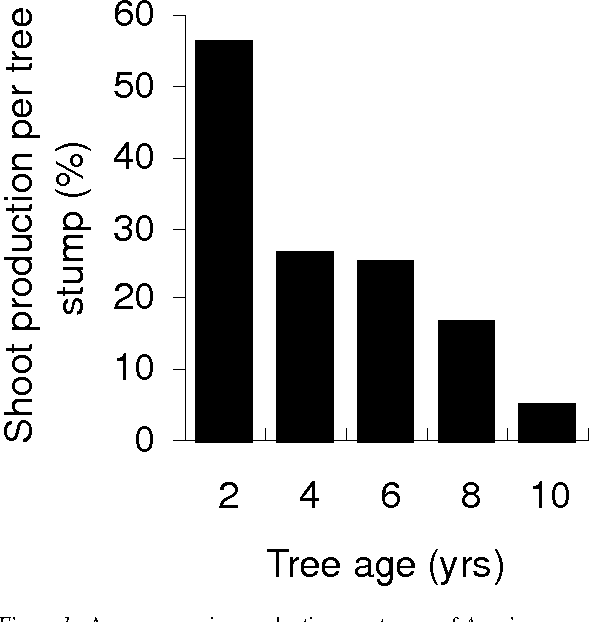Figure 1. Average coppice production on stumps of Acacia mearnsii trees of various ages; each age group was comprised of 10 trees.