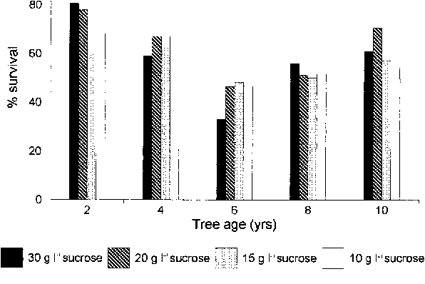 Figure 2. Survival of decontaminated Acacia mearnsii coppice explants taken from tree stumps of various ages. HgCl2 (0.1%) was used as a sterilant for a period of 15 min.