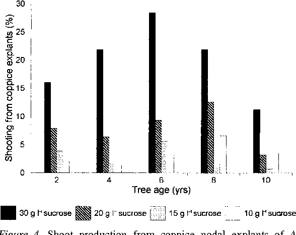 Figure 4. Shoot production from coppice nodal explants of A. mearnsii, taken from tree stumps of various ages. MS medium supplemented with 2.0 mg l−1 BA and various concentrations of sucrose were used; each age group consisted of 10 trees.