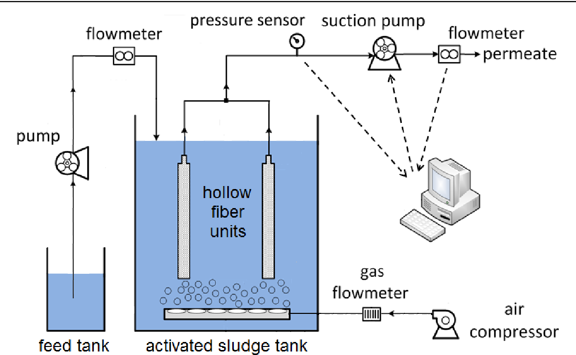 Effect of pressure relaxation and membrane backwash on
