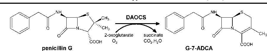 Fig. 1 DAOCS catalyzed conversion of penicillin G to G-7-ADCA