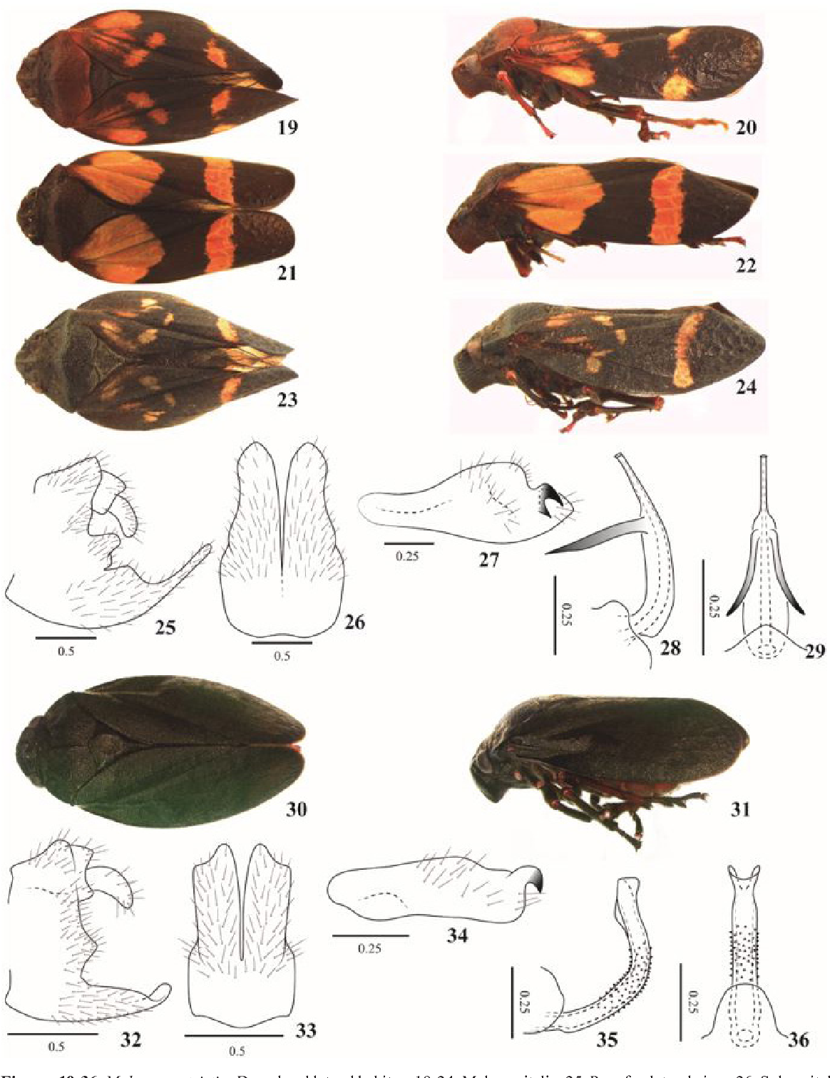 figure 19-36