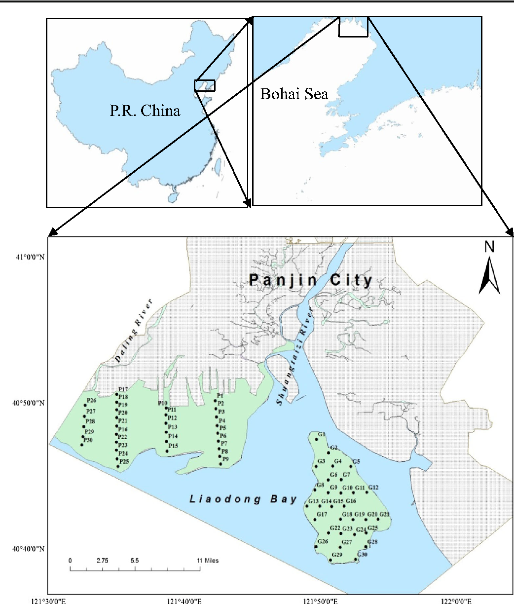 Fig. 1 Map of the study area showing the sediment sampling sites in the sandy flat system of the Shuangtaizi Estuary. Areas shaded in green are Panshan Shore (PS, in the west of the Shuangtaizi River) and Geligang (GLG, in a fusiform shape)