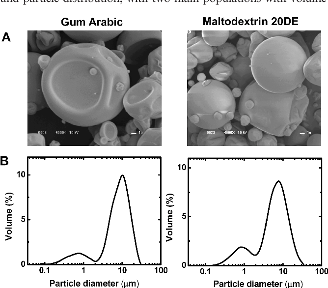 Figure 2. (A) SEM micrographs (magnified 4000 ; acceleration voltage of 10 kV) and (B) particle size distribution obtained by DLSmeasurements of 5 mg/mL microcapsules containing apo-120-carotenal in GA and MD microcapsules.