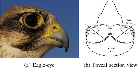 Figure 1 for A Miniature Biological Eagle-Eye Vision System for Small Target Detection