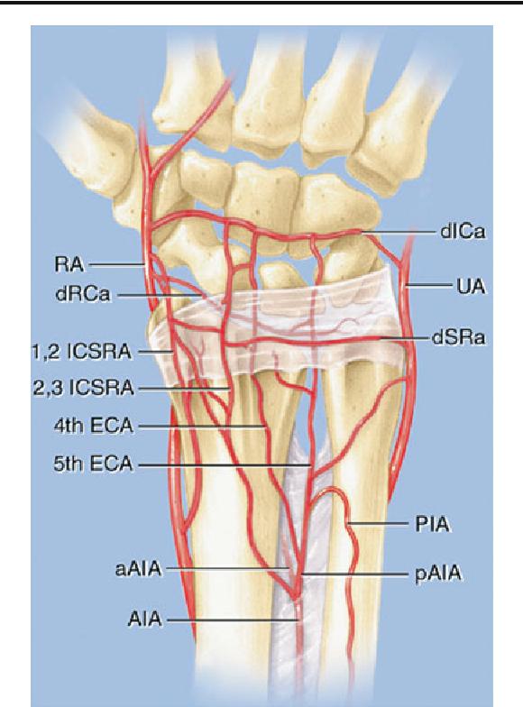 Vascularized bone grafts for the treatment of carpal bone pathology ...